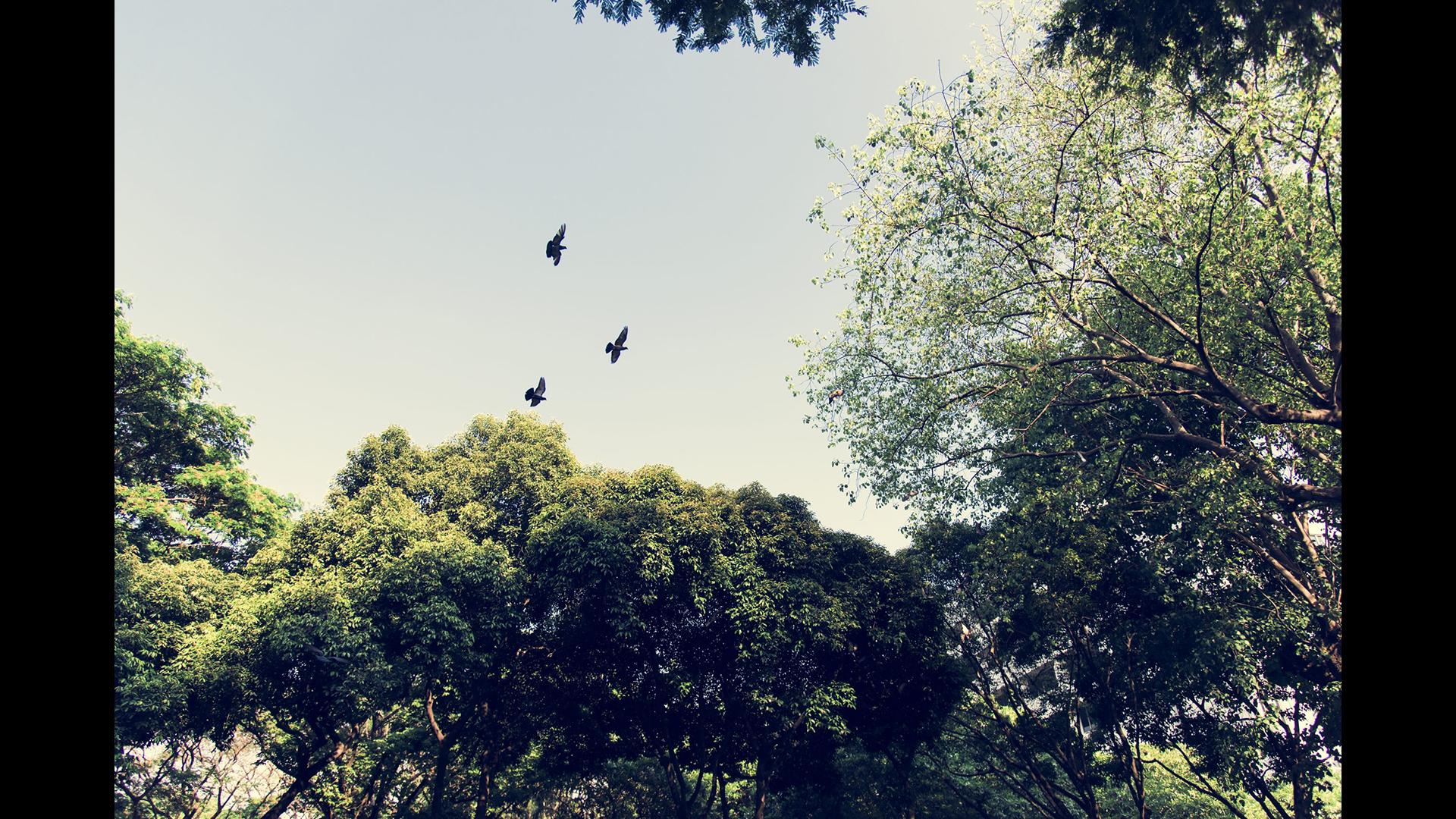 Birds Observatory Reserve